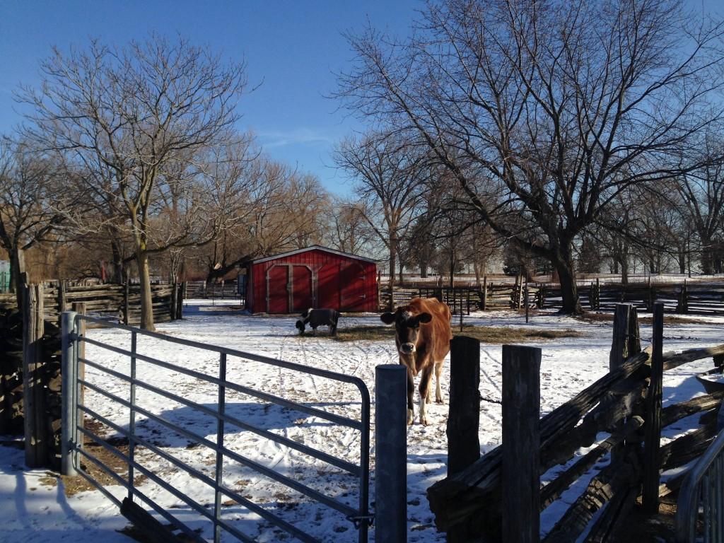 Permanent residents at the Far Enough Farm