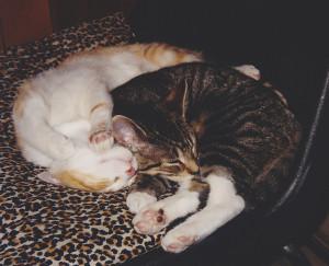 Lucy & Ethel (kittens)